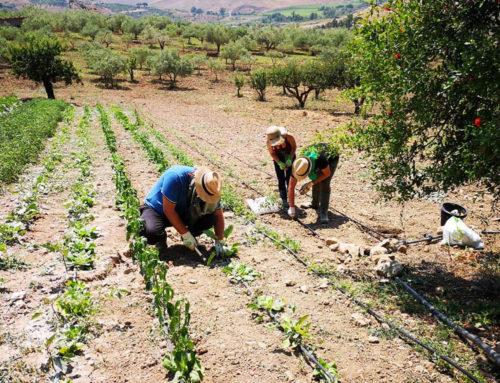 Alcuni buoni motivi per coltivare l'orto e partecipare al nostro corso.